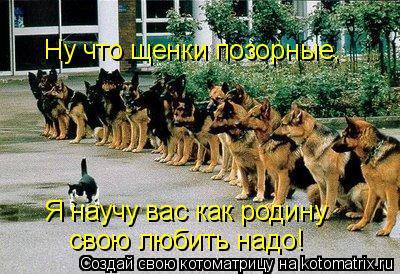 Котоматрица: Ну что щенки позорные, Я научу вас как родину свою любить надо!