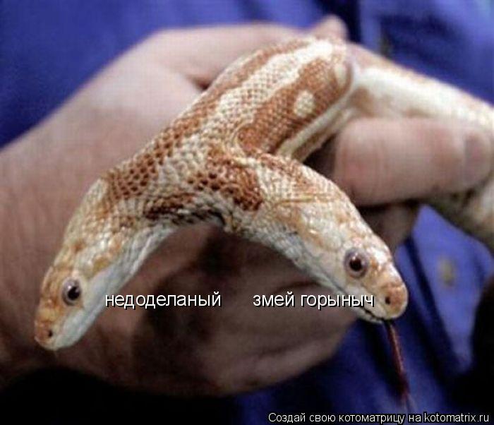 Котоматрица: недоделаный      змей горыныч