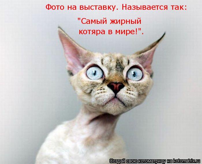 """Котоматрица: """"Самый жирный  котяра в мире!"""". Фото на выставку. Называется так:"""