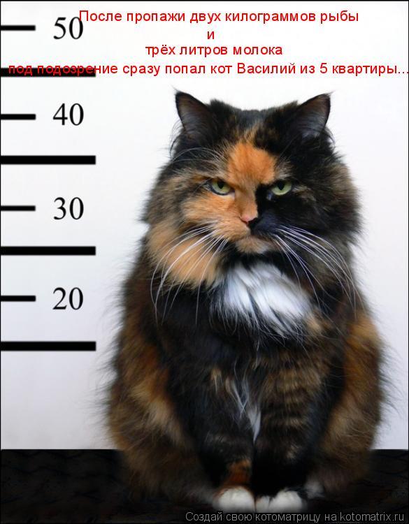 Котоматрица: После пропажи двух килограммов рыбы и трёх литров молока  под подозрение сразу попал кот Василий из 5 квартиры...