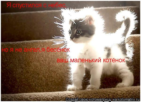 Котоматрица: Я спустился с небес, но я не ангел,я бесёнок ваш маленький котёнок