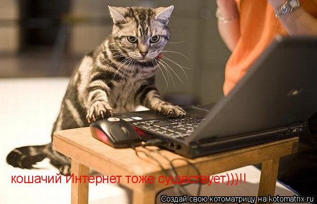 Котоматрица: кошачий Интернет тоже существует)))!!