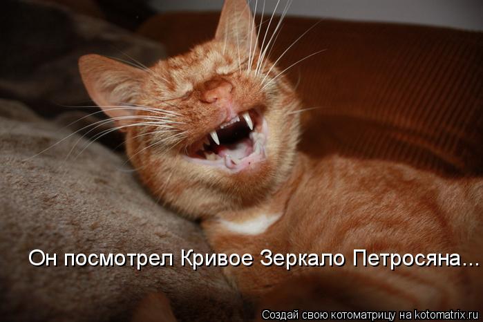 Котоматрица: Он посмотрел Кривое Зеркало Петросяна...