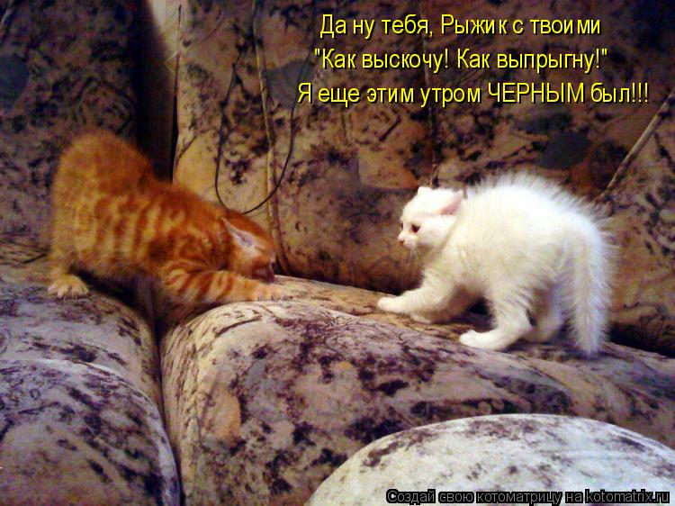 """Котоматрица: Да ну тебя, Рыжик с твоими  """"Как выскочу! Как выпрыгну!"""" Я еще этим утром ЧЕРНЫМ был!!!"""