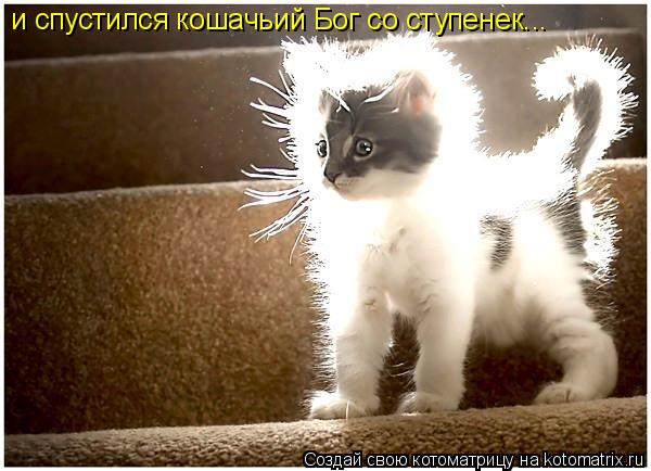 Котоматрица: и спустился кошачьий Бог со ступенек...