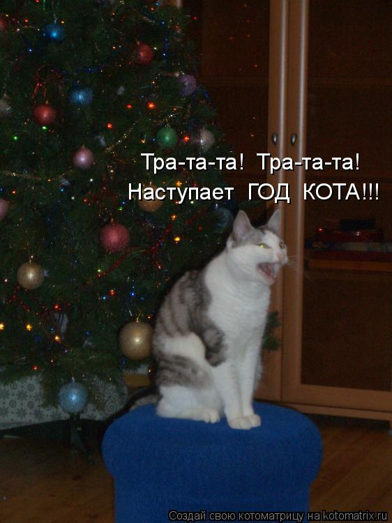 Котоматрица: Тра-та-та!  Тра-та-та!  Наступает  ГОД  КОТА!!!