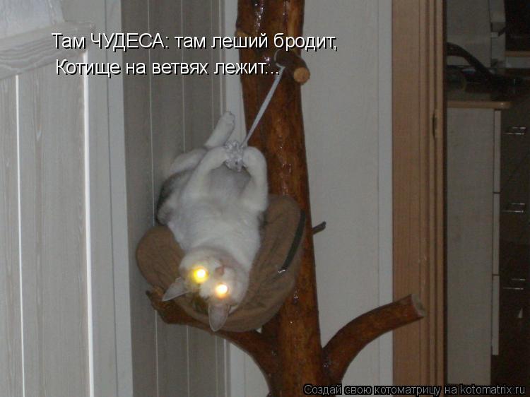 Котоматрица: Там ЧУДЕСА: там леший бродит,  Котище на ветвях лежит...