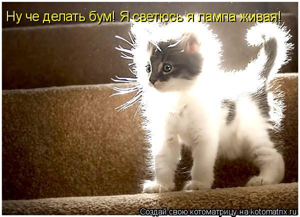 Котоматрица: Ну че делать бум! Я светюсь я лампа живая!