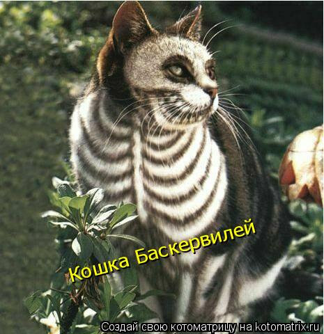 Котоматрица: Кошка Баскервилей