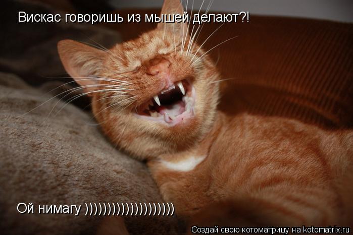 Котоматрица: Вискас говоришь из мышей делают?! Ой нимагу ))))))))))))))))))))