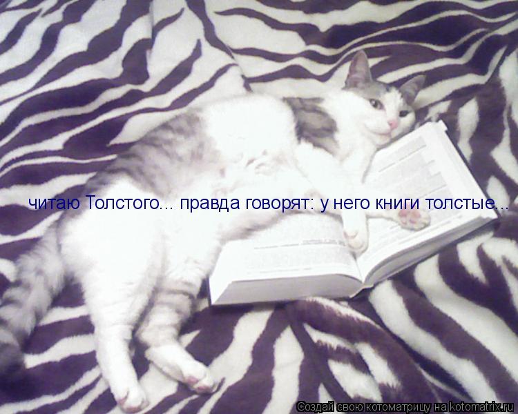 Котоматрица: читаю Толстого... правда говорят: у него книги толстые...