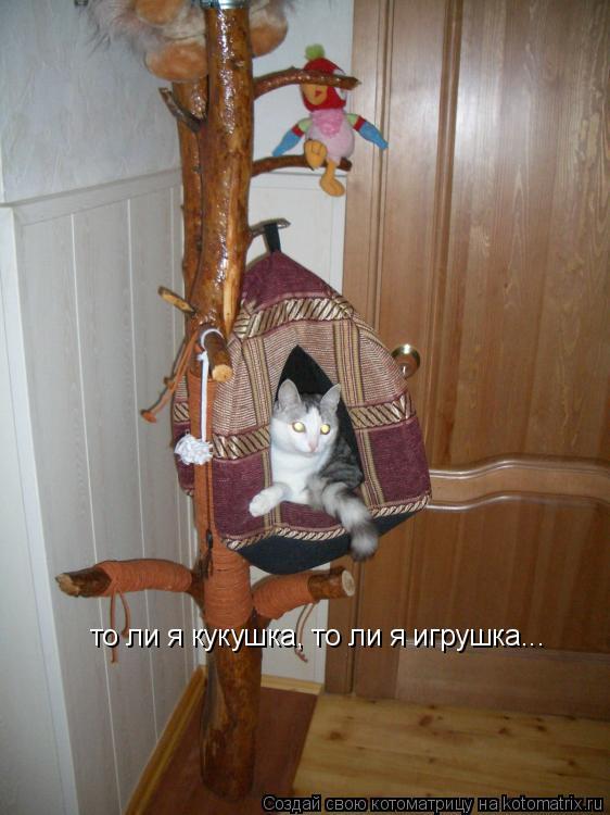 Котоматрица: то ли я кукушка, то ли я игрушка...