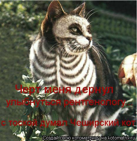 Котоматрица: с тоской думал Чеширский кот Черт меня дернул улыбнуться рентгенологу...