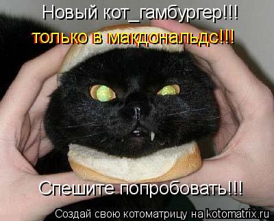 Котоматрица: Новый кот_гамбургер!!! Спешите попробовать!!! только в макдональдс!!! только в макдональдс!!!