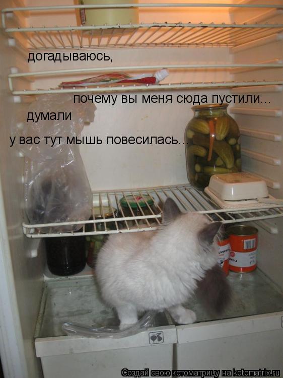 Котоматрица: догадываюсь,  почему вы меня сюда пустили... думали  у вас тут мышь повесилась...