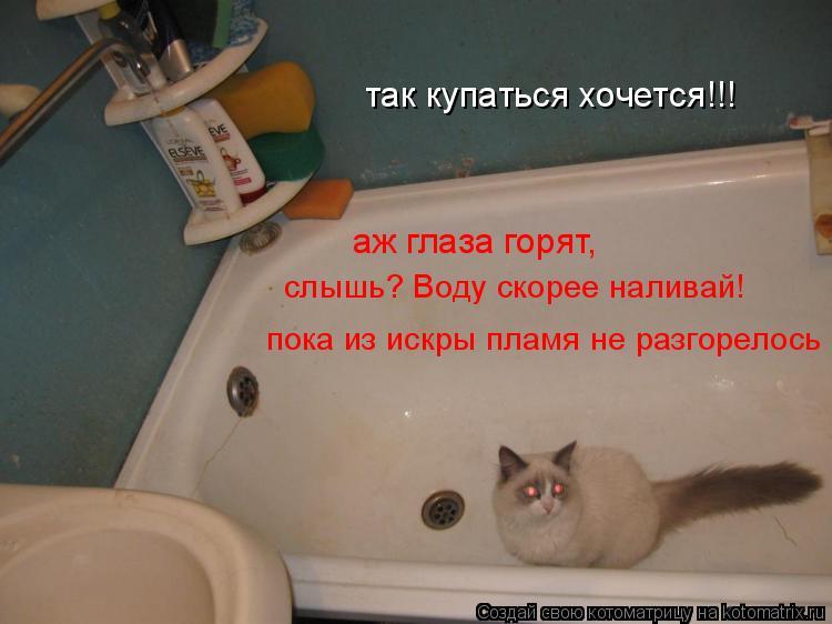 Котоматрица: так купаться хочется!!! аж глаза горят, слышь? Воду скорее наливай! пока из искры пламя не разгорелось