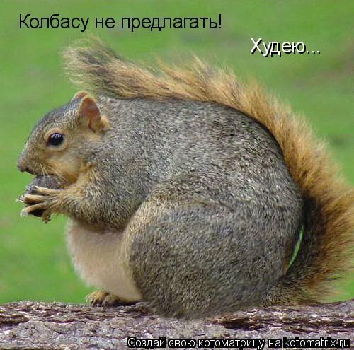 Котоматрица: Колбасу не предлагать! Худею...