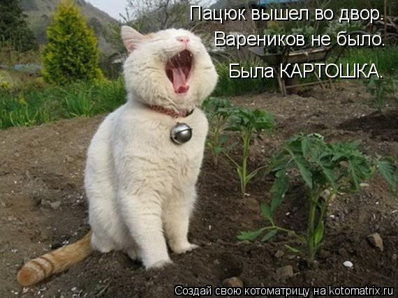 Котоматрица: Пацюк вышел во двор. Вареников не было. Была КАРТОШКА.