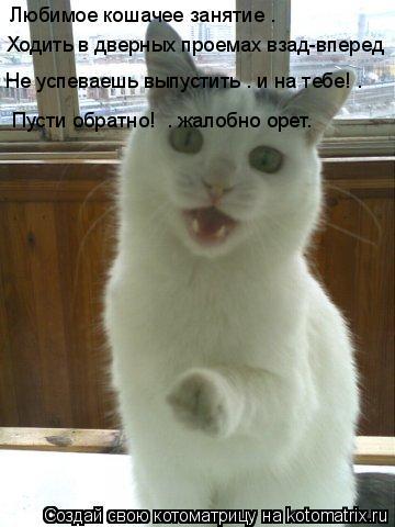 Котоматрица: Любимое кошачее занятие – Ходить в дверных проемах взад-вперед Не успеваешь выпустить – и на тебе! – «Пусти обратно!» – жалобно орет.