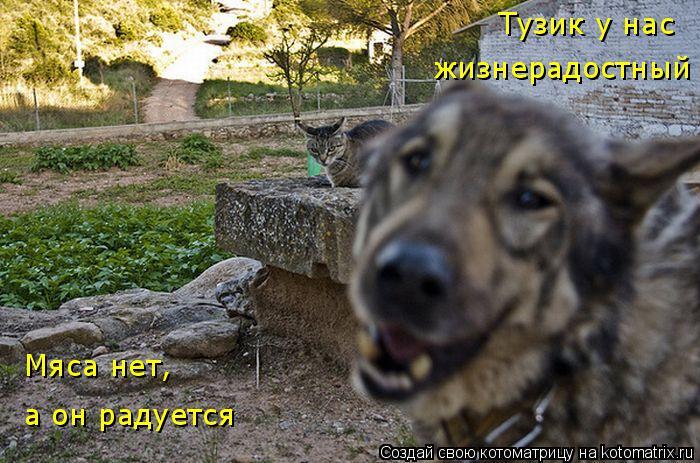 Котоматрица: Тузик у нас жизнерадостный Тузик у нас  жизнерадостный Мяса нет, а он радуется