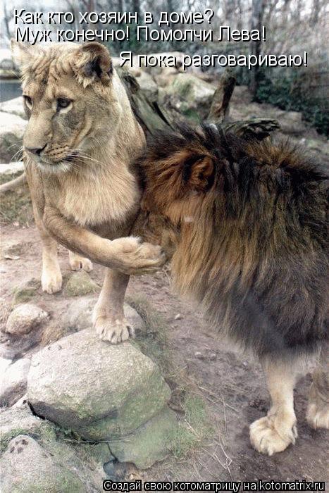 Котоматрица: Как кто хозяин в доме? Муж конечно! Помолчи Лева! Я пока разговариваю!