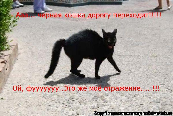 Котоматрица: - Ааа... черная кошка дорогу переходит!!!!!  Ой, фууууууу..Это же моё отражение.....!!!