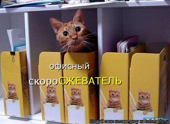 Котоматрица: офисный  скоро СЖЕВАТЕЛЬ