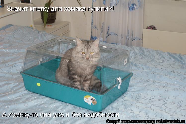 Котоматрица: Значит клетку для хомяка купили?! А хомяку-то она уже и без надобности...