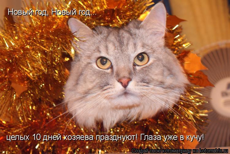 Котоматрица: Новый год, Новый год... целых 10 дней хозяева празднуют! Глаза уже в кучу!