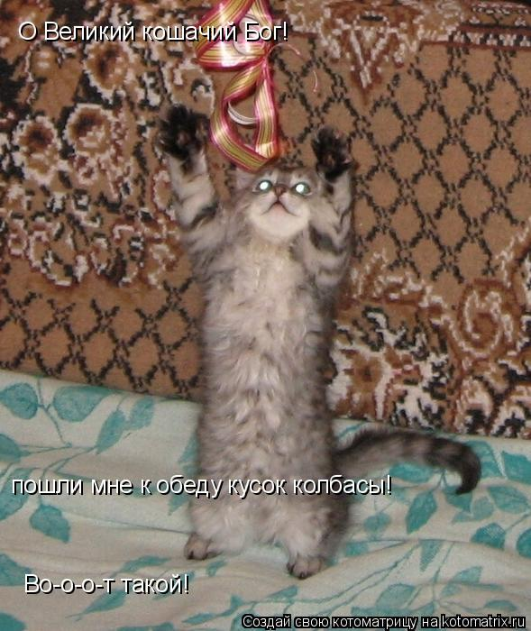 Котоматрица: О Великий кошачий Бог! пошли мне к обеду кусок колбасы!  Во-о-о-т такой!