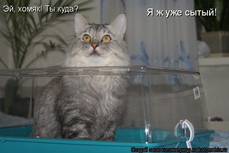 Котоматрица: Эй, хомяк! Ты куда? Я ж уже сытый!