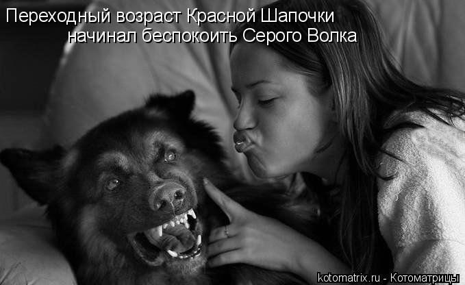 Котоматрица: Переходный возраст Красной Шапочки начинал беспокоить Серого Волка