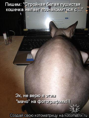 """Котоматрица: Пишем: """"Стройная белая пушистая  кошечка желает познакомиться с ..."""" Эх, не верю я этим  """"мачо"""" на фотографиях!!!"""
