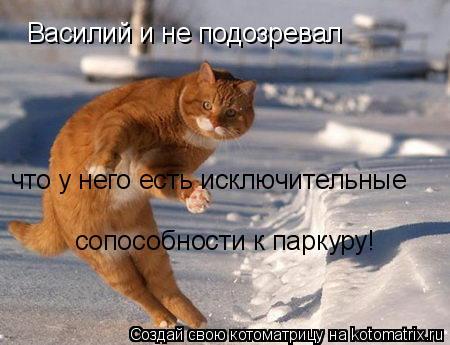 Котоматрица: Василий и не подозревал  что у него есть исключительные сопособности к паркуру!