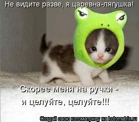 Котоматрица: Не видите разве, я царевна-лягушка! Скорее меня на ручки -  и целуйте, целуйте!!!