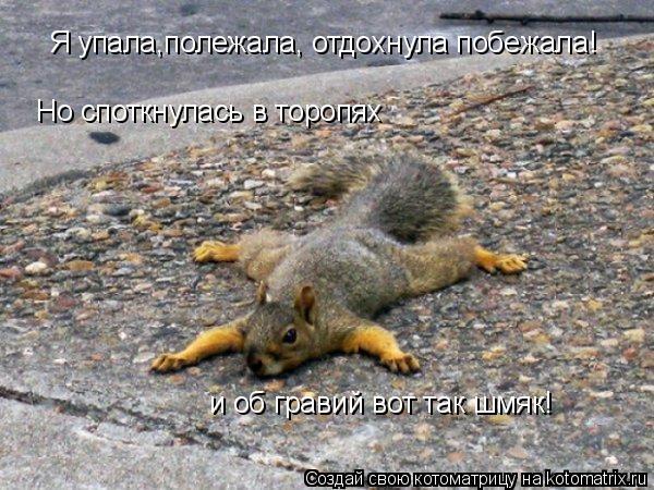 Котоматрица: Я упала,полежала, отдохнула побежала! Но споткнулась в торопях и об гравий вот так шмяк!
