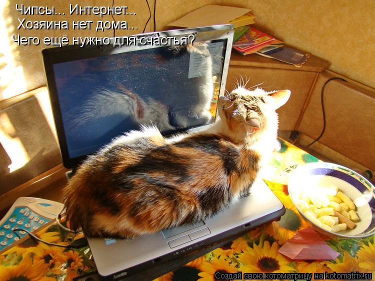 Котоматрица: Чипсы... Интернет... Хозяина нет дома... Чего ещё нужно для счастья?