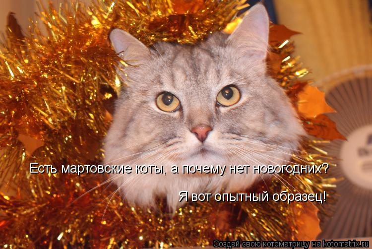 Котоматрица: Есть мартовские коты, а почему нет новогодних? Я вот опытный образец!