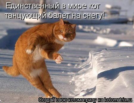 Котоматрица: Единственный в мире кот танцующий балет на снегу!