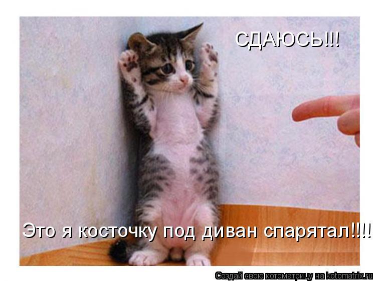 Котоматрица: СДАЮСЬ!!! Это я косточку под диван спарятал!!!!
