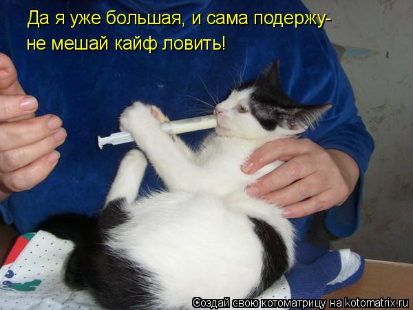 Котоматрица: Да я уже большая, и сама подержу- не мешай кайф ловить!