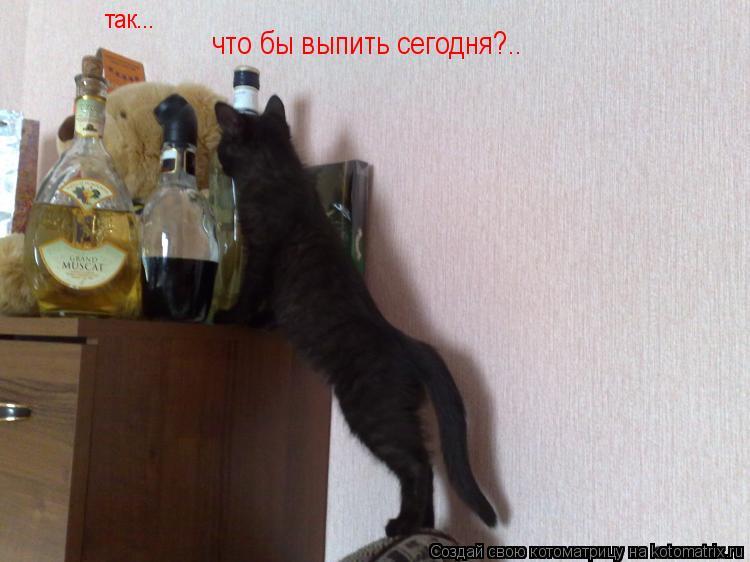 Котоматрица: так... что бы выпить сегодня?..