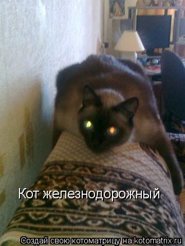 Котоматрица: Кот железнодорожный