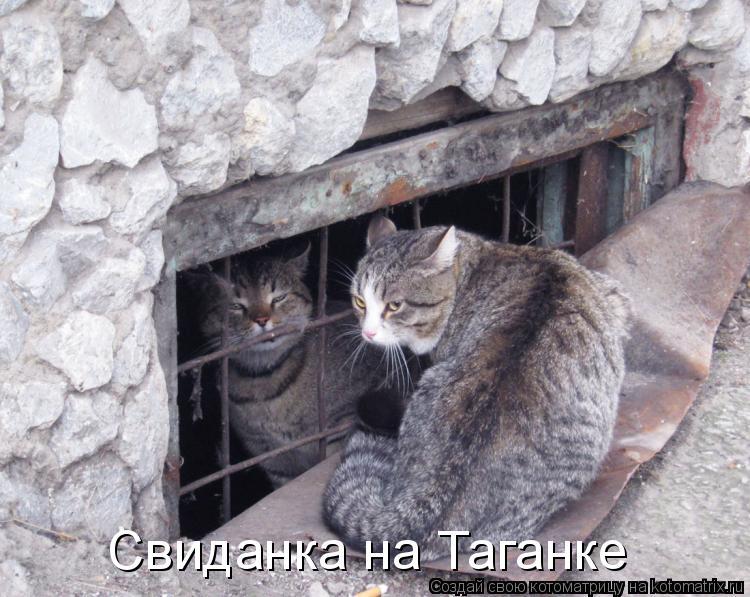 Котоматрица: Свиданка на Таганке