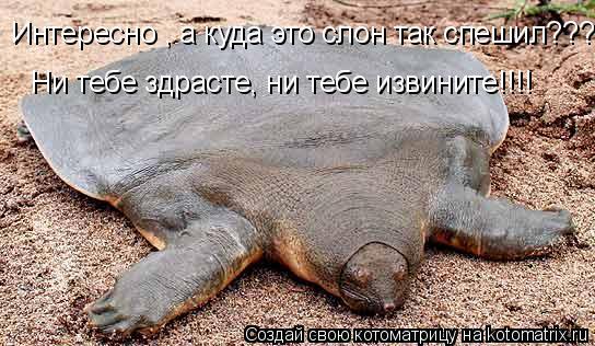 Котоматрица: Интересно , а куда это слон так спешил??? Ни тебе здрасте, ни тебе извините!!!!
