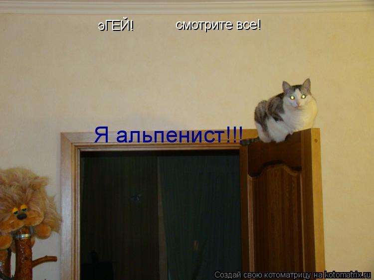 Котоматрица: эГЕЙ! смотрите все! Я альпенист!!!