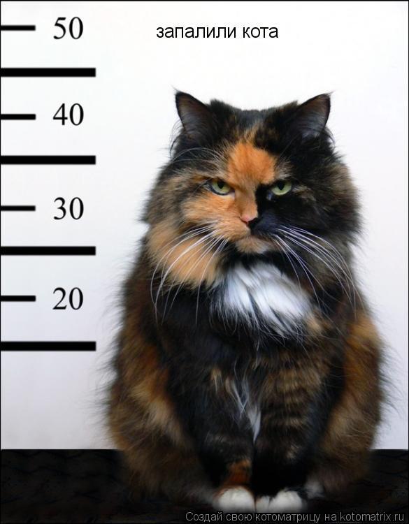 Котоматрица: запалили кота