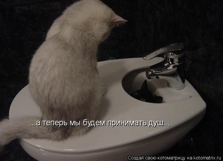 Котоматрица: ...а теперь мы будем принимать душ...
