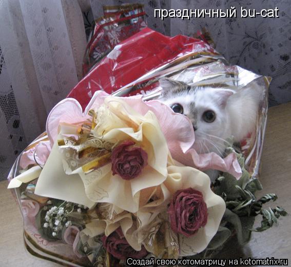 Котоматрица: праздничный bu-cat