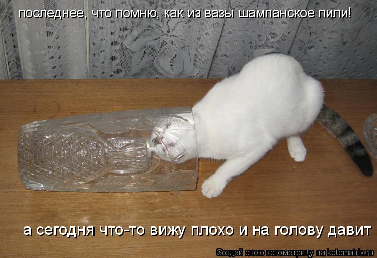 Котоматрица: последнее, что помню, как из вазы шампанское пили! а сегодня что-то вижу плохо и на голову давит